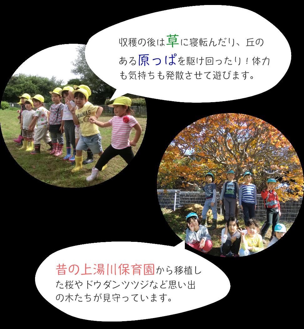収穫の後は草に寝転んだり、丘のある原っぱを駆け回ったり!体力も気持ちも発散させて遊びます。 昔の上湯川保育園から移植した桜やドウダンツツジなど思い出の木たちが見守っています。